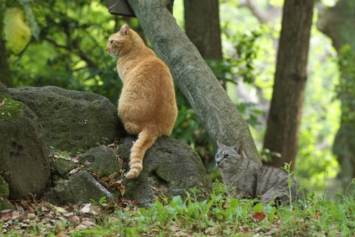 猫_20100508.jpg